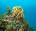Diving Tourism Αλόννησος